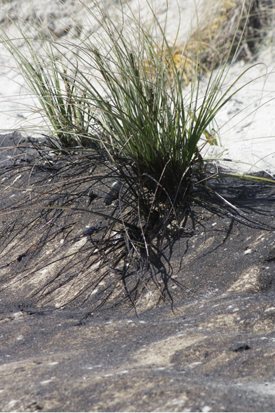 Rena Disaster, Oil Spill, Tauranga, New Zealand